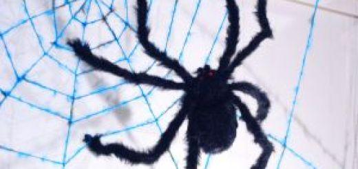 wool_spider