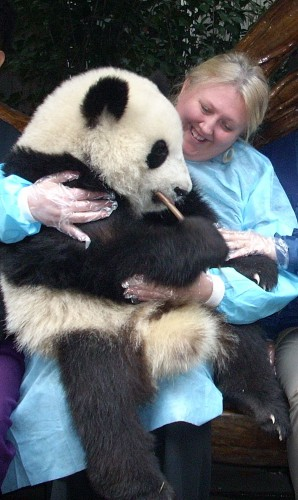 That's me in Chengdu, China. Holding a live baby panda.