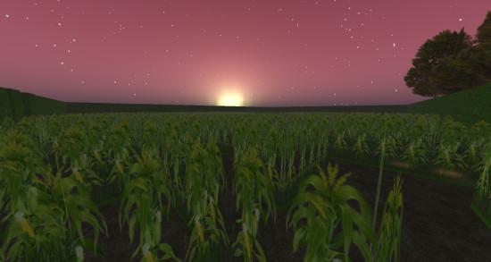 Corn maze. (Image courtesy Island Oasis.)