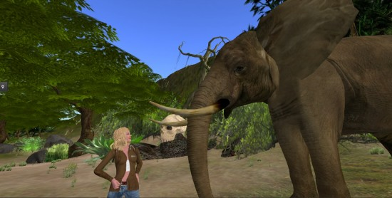 The safari-themed Virunga Mountains region on OSgrid. That elephant was feisty.