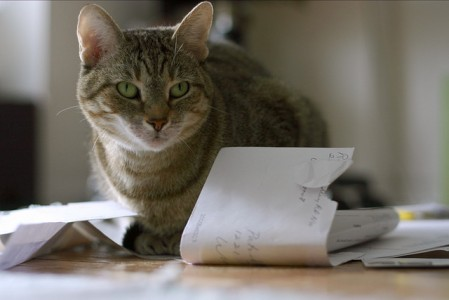 Or paper. You can still mail paper to people. It's still a thing, and gives cats something to sit on. (Image by Patrick Calder via Flickr.)