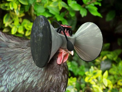 (Image courtesy Second Livestock.)