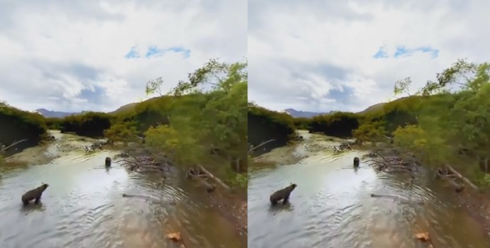 An immersive video of bears in Kamchatka.