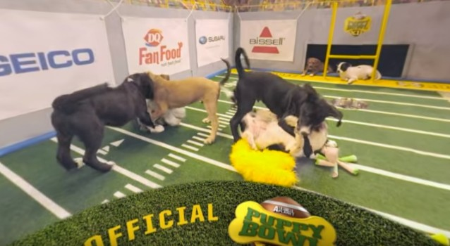 Still from the Puppy Bowl XII Highlight Reel.